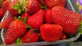 nya mogna jordgubbar Fotografering för Bildbyråer
