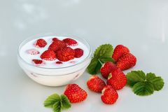 Nya mogna jordgubbar i en bunke med yoghurt på en vit tabell utomhus på en sommardag royaltyfri bild