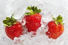 Nya mogna jordgubbar med iskuber Royaltyfria Foton
