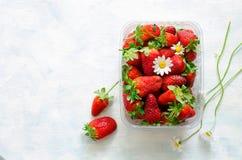 Nya mogna jordgubbar och kamomillblommor i plast- ask på blå bakgrund Royaltyfri Bild