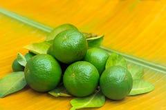 Nya mogna limefrukter på ett bananblad Royaltyfri Fotografi