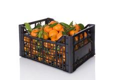 Nya mogna mandarines i spjällåda Royaltyfri Fotografi