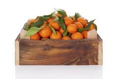 Nya mogna mandarines i träspjällåda Arkivbilder