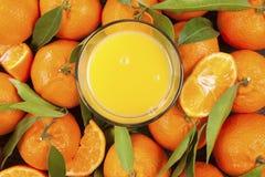 Nya mogna mandarines på trätabellen Arkivbild