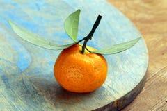 Nya mogna orange mandariner (tangerin) Arkivbild