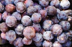 Nya mogna plommoner eller textur, violett blå röd purpurfärgad söt ny organisk plommon som bakgrund, bästa sikt av naturliga plom Arkivbild