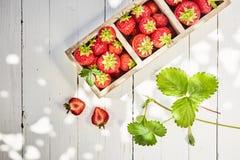 Nya mogna r?da jordgubbar i en delad ask royaltyfria foton