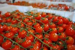 Nya mogna röda tomater i askar i hel försäljning marknadsför Royaltyfria Bilder