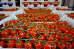 Nya mogna röda tomater i askar i hel försäljning marknadsför Royaltyfri Fotografi
