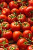 Nya mogna röda tomater i marknaden Arkivbild