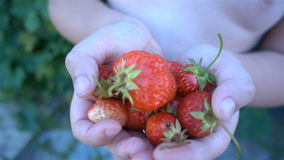 Nya, mogna saftiga jordgubbar Röd jordgubbe HD arkivfilmer