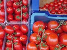 nya mogna tomater Arkivfoton