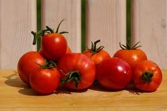 Nya mogna tomater Royaltyfri Foto