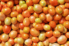 nya mogna tomater Arkivbilder