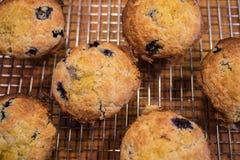 nya muffiner Fotografering för Bildbyråer