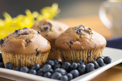 nya muffiner för blåbär arkivfoton