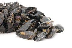 Nya musslor Royaltyfria Bilder
