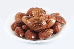 Nya musslor Royaltyfri Fotografi