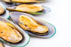 nya musslor Royaltyfria Foton