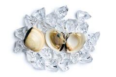 Nya musslor på iskuber Royaltyfri Fotografi