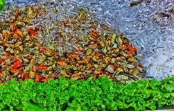 Nya musslor på marknadsföra i Thaillnd Arkivfoto