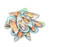 Nya musslor på vit bakgrund royaltyfri fotografi