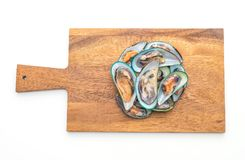 Nya musslor på vit bakgrund royaltyfria bilder