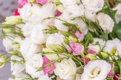 Nya naturliga blommor Arkivbilder
