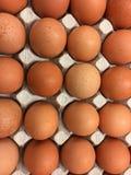 Nya naturliga fega ägg i pappemballage Royaltyfri Fotografi