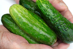 Nya naturliga gröna gurkor i hand Arkivbilder