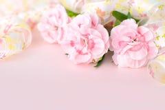 Nya nejlikor på den rosa papperen, baner för moderdag Royaltyfri Fotografi