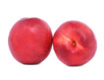 nya nektariner två Den röda nektarinen bär frukt på en vit bakgrund Strikt vegetarianingredienser sunda mellanmål Söta sommarfruk royaltyfria foton