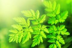 Nya nya gräsplansidor Royaltyfri Foto