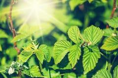 Nya nya gräsplansidor Royaltyfria Bilder