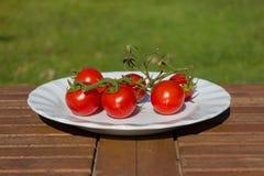 Nya och frasiga tomater på en platta Royaltyfria Bilder