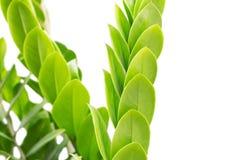 nya och gröna sidor som isoleras på vit bakgrund Arkivbild