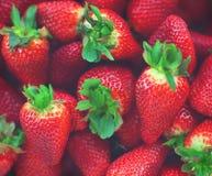 Nya och mogna jordgubbar En ljus radda, är nya bär av en jordgubbe royaltyfria bilder