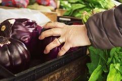 Nya och organiska frukter och grönsaker på de lokala bönderna fördärvar Fotografering för Bildbyråer
