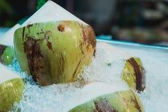 Nya och söta gröna kokosnötter Royaltyfria Foton