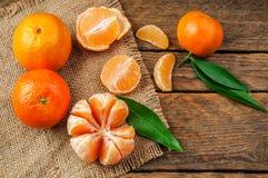 Nya och söta mandarines Royaltyfri Fotografi