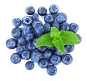 Nya och saftiga blåbär med mintkaramellen som är full av vitaminer Healthful och söta blåbär som isoleras på en vit bakgrund, när royaltyfri bild