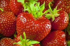 Nya och saftiga Strawberrys Arkivbild