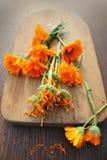 Nya och torkade växt- calendulablommor Arkivfoton