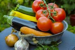 Nya olika grönsaker för garnering, soppor, gastronomisk disk royaltyfria bilder