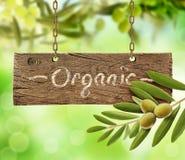 Nya oliv, olivträd och träbräde fotografering för bildbyråer