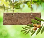 Nya oliv, olivträd och träbräde royaltyfri foto