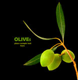 nya olivgrön royaltyfri bild