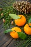 Nya orange clementinetangerin med den barrträds- visaren förgrena sig Arkivfoton