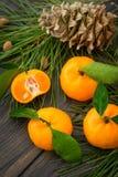 Nya orange clementinetangerin med det gräsplansidor och barrträdet Royaltyfria Foton