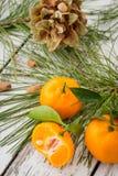 Nya orange clementinetangerin med det gräsplansidor och barrträdet Royaltyfri Bild